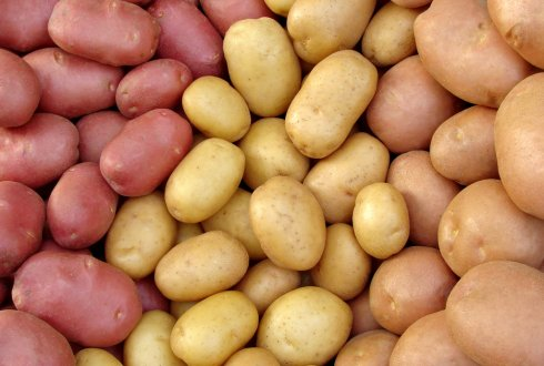 Disruptive Potato Breeder Solynta secures strong backing