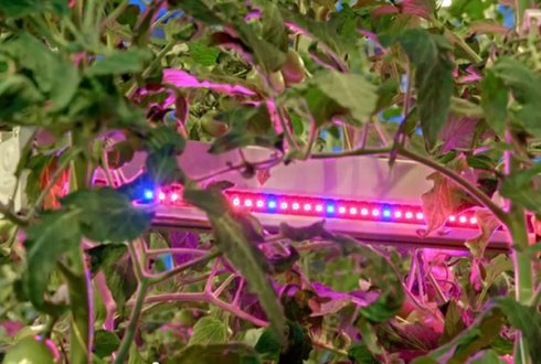 LEDs for energy savings in greenhouses