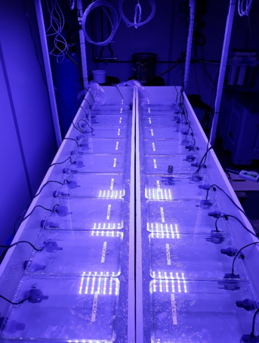 Setup of 20 miniature aquaria for controlled laboratory studies on reef-building corals. Photo: Dr. T. Wijgerde.