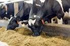 Variation in efficacy of new feed supplement to reduce methane emissions identified