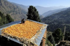 Climate Smart Agriculture in the Himalayas