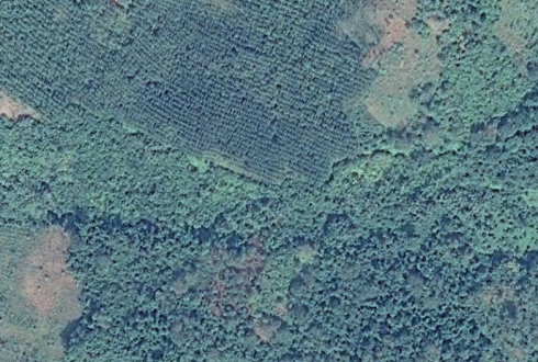 A Screenshot of forest plantations and natural forests in Cóte d'Ivoire