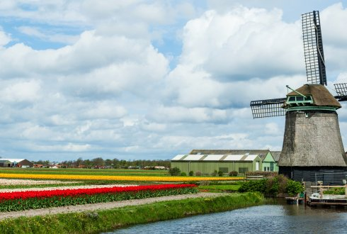 Discovering Dutch agriculture and horticulture