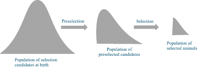 Figure 1. Stages of selecting parents of the next generation