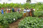 N2Africa: 10 years of cooperation with small African farmers