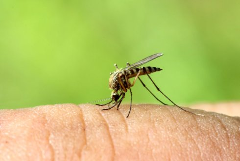 Push-pull tactics to disrupt the host-seeking behaviour of malaria mosquitoes