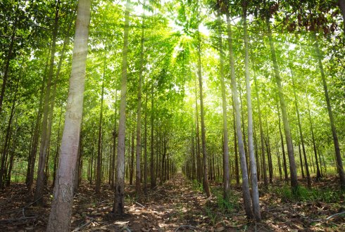 Climate-change effects on the Zambezi teak forests'productivity in Zambia
