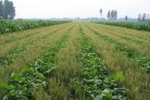 Mini-symposium on Crop yields in intercropping