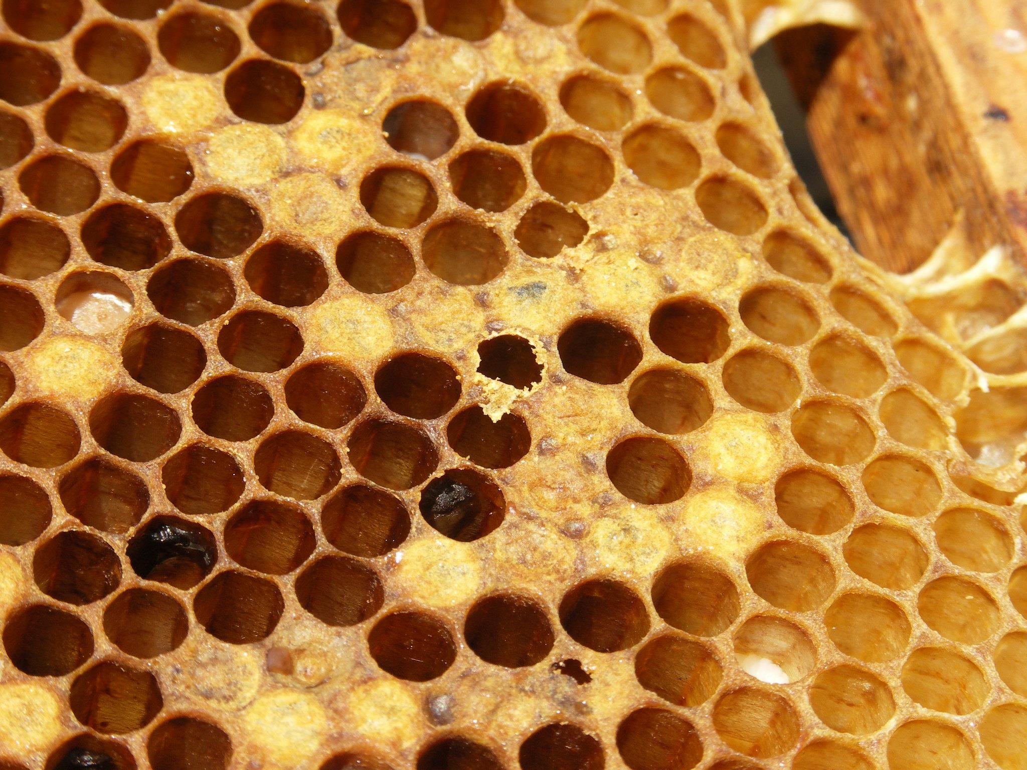 Bee diseases - WUR