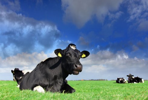 European PROLIFIC project on dairy fertility has come to an end
