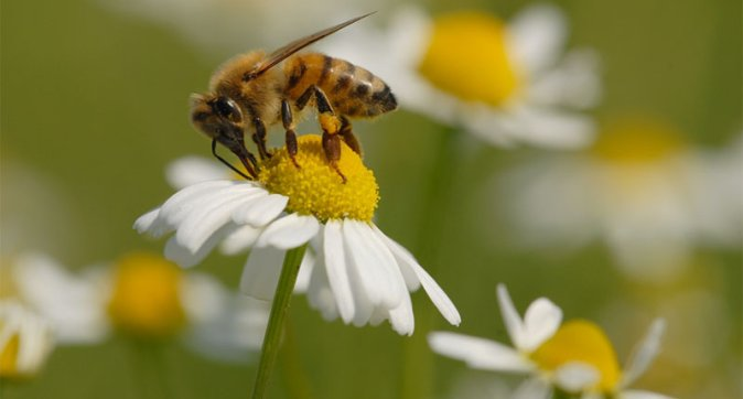 effects on honey bees research paper Scientific american is the essential guide to the most awe-inspiring advances in science and technology, explaining how they change our understanding of the world and shape our lives.
