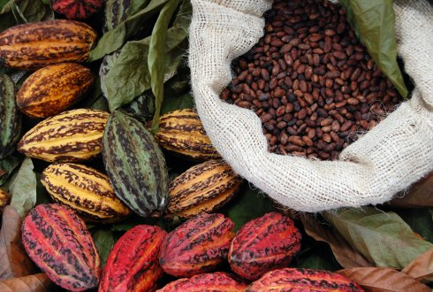Capacity development in Cocoa value chains & Sustainable development