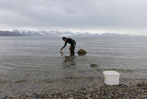 The acute effects of oil in Arctic marine systems