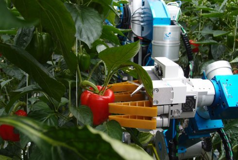First ever working sweet-pepper harvesting robot