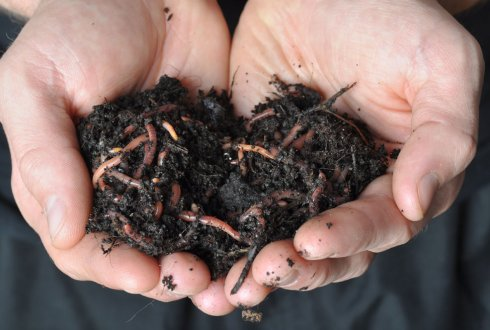 Ecological functions of earthworms in soil