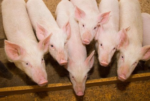 Successful course Gut health in pigs and poultry