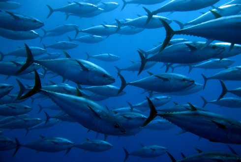 Towards sustainable tuna fishing: Understanding the role of private incentive mechanisms