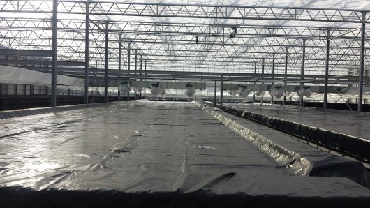 The greenhouse contains large basins with water that are used to harvest heat.