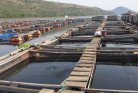 Bottlenecks and opportunities for aquaculture in Ghana