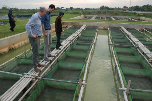 Together with local partners, Wageningen University & Research designs breeding programs for aquaculture that increase the productivity and profitability of smallholder farms.