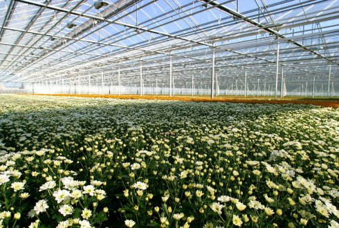 Assimilation Light In Greenhouse Crops Wur