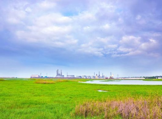 In the Water Nexus programme, scientists from Wageningen University & Research aim to close the industrial water cycle by using saline water and reusing wastewater treated in green infrastructure. Photo: Shutterstock