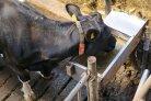 heerlijk, helder,en schoon drinkwater voor melkvee