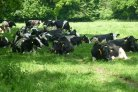 Routekaart klimaatslimme melkveehouderij