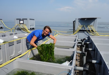 Ecological feasibility of seaweed cultivation