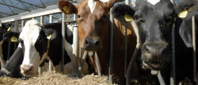 Ammoniakemissie op Koeien & Kansen-bedrijven weer gedaald