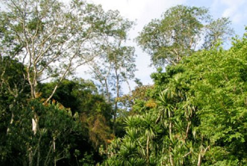 rainforest biodiversity