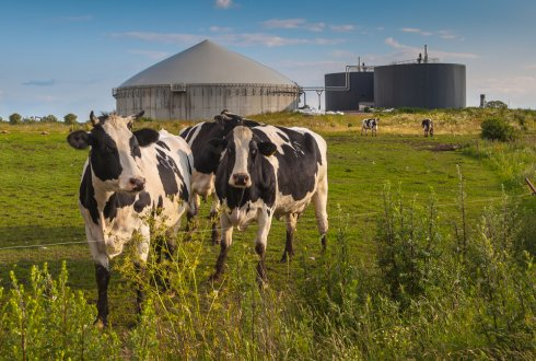 Manure: raw material for the biobased economy