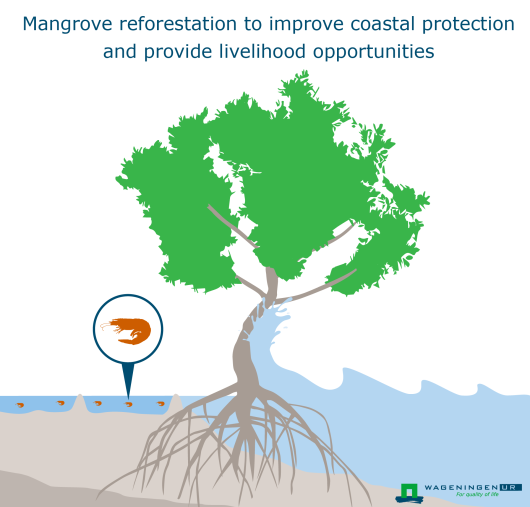 Mangrove reforestation to improve coastal protection and provide livelihood opportunities