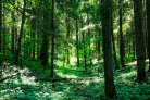 Forests, bioenergy and climate change mitigation: are the worries justified?