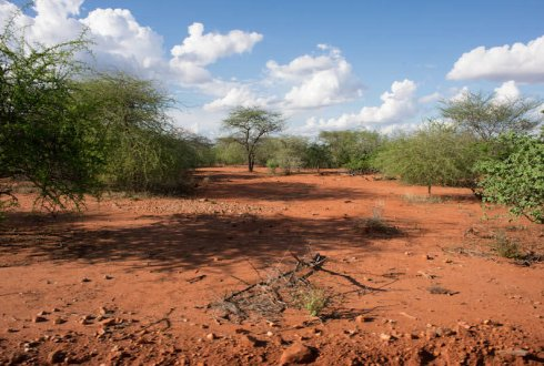 Land degradation essay