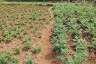 Building on Fertile Grounds - Burundi