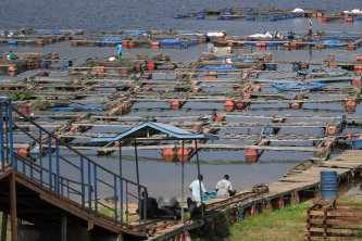 Aquaculture in the EAC