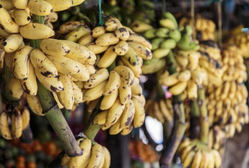 Going bananas - Where does the banana come from?