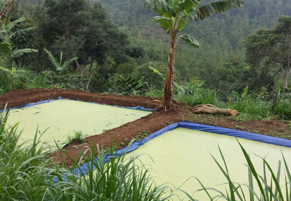 Sustainable farming in Indonesia using bioslurry-grown duckweed as animal feed