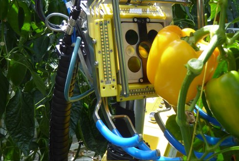 SWEEPER consortium demonstrates its sweet pepper harvesting robot