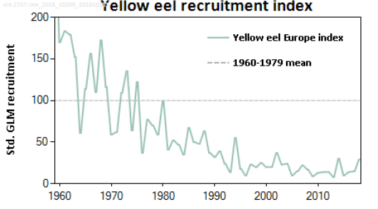Yelloweelrecruitmentindex_2019.png