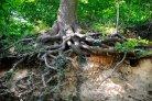 Onderzoekers brengen wereldwijd in kaart hoe bomen, schimmels en bacteriën samenwerken