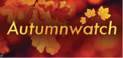 Autumnwatch.png