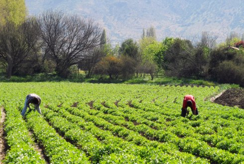 Wageningen UR stimulates innovation in Chilean vegetable and flower sector