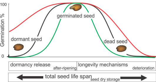 seed life span 3.png