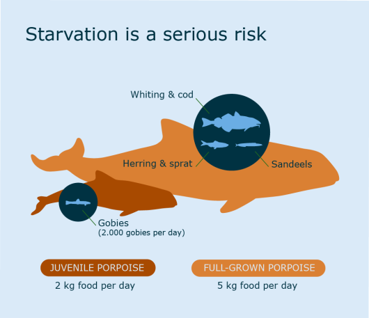 Starvation is a serious risk