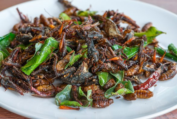 Eating insects:Consumer acceptance of a culturally inappropriate food