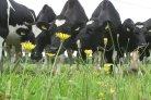 Biodiversiteit ook financieel aantrekkelijk 20 juni Melkers van Morgen