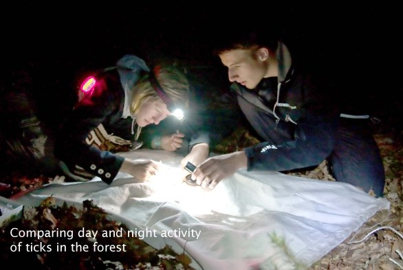 Comparing day and night activity of ticks in the forest