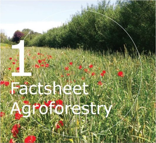 Factsheet Agroforestry